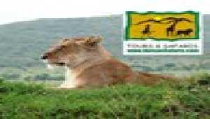 Safari Africa Kenya Jigsaw