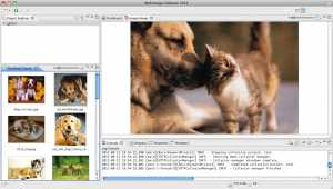 Web Image Collector 2012