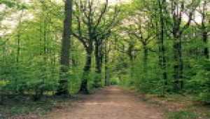 7art Wild Forest ScreenSaver